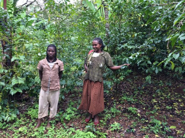 Farmářka kávy Yirga Cheffee Konga, Jižní Etiopie (c) Daniel Kolský