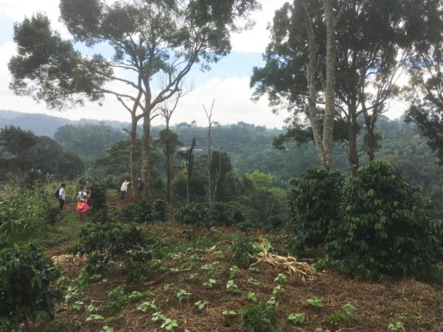 Na kávové farmě Jazmin y Rosa
