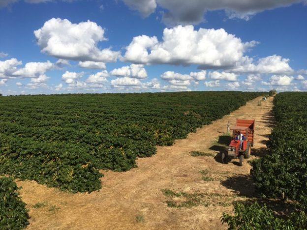 Coffee farm Olhos D'Agua farm