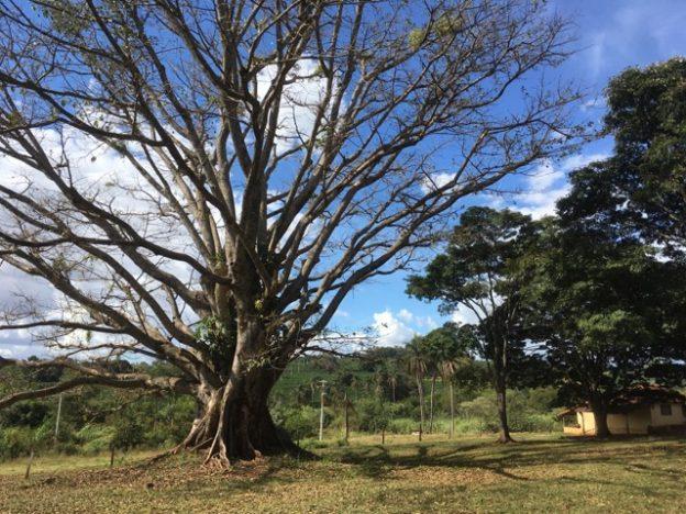 Farma Santa Tereza do Marfim