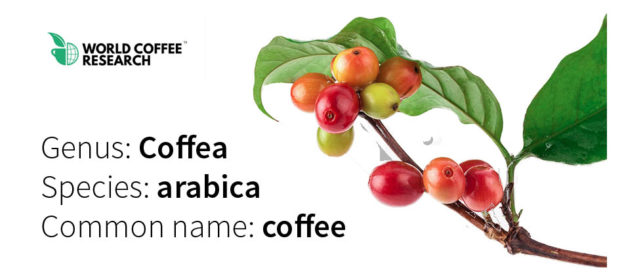 World Coffee Research